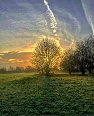 Stokeswood Park image